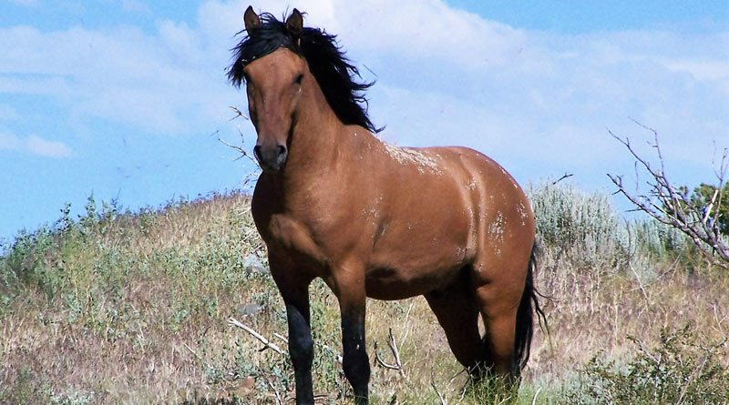 "Is the latest wild horse plan really ""a path forward""? - Horsetalk ..."