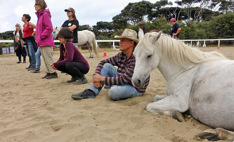 The festival will explore our connectedness with horses.