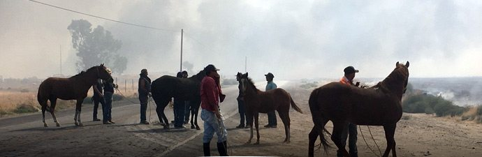 Horses being evacuated from fire-stricken areas in California.