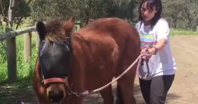 Tanya tries to get Cheeky, 35, moving, but the pain of laminitis makes him reluctant.