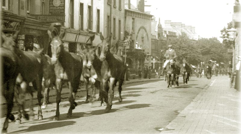 Mules walked through the streets of Minehead to war.