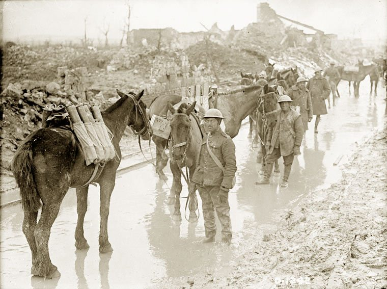 Eight million equines on both sides died in WW1.
