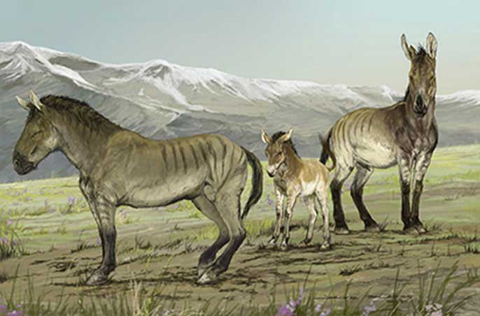 A depiction of a family of stilt-legged horses (Haringtonhippus francisci) in Yukon, Canada, during the last ice age. Image: Credit: Jorge Blanco