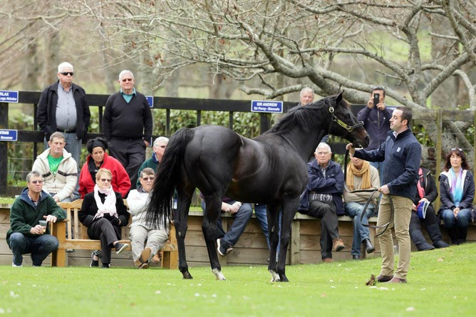 Rich Hill Stud stallion manager Damien Kirwan parading Pentire.