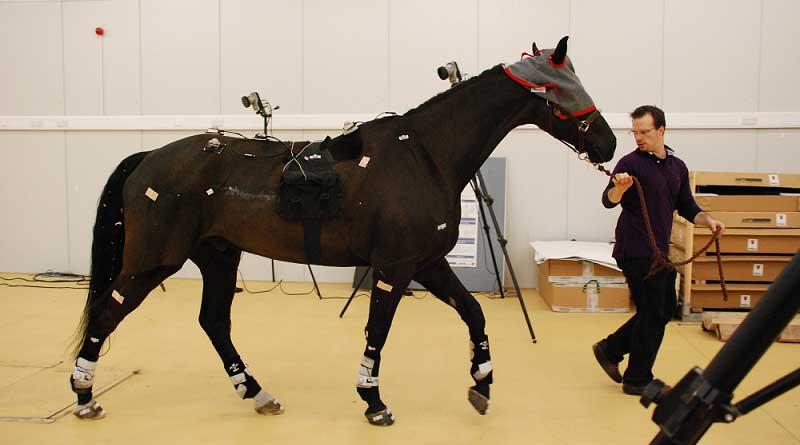 Dr Emil Olsen evaluates a horse.