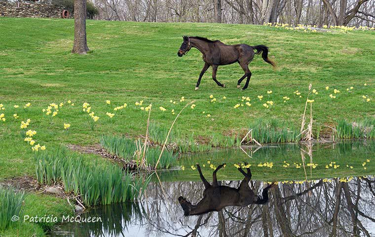 General Poppy at 35 is thought to be Secretariat's oldest remaining progeny.