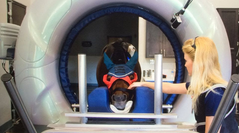A horse in the new CT scan machine at Palm Beach Equine Clinic.