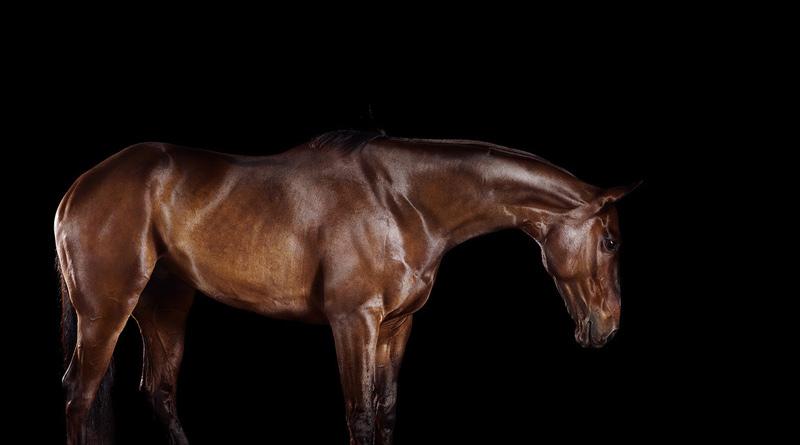 Polo pony fine art photography by Ramon-Casares.
