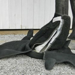 Dry boot system a good option for cooling legs of laminitic horses – study