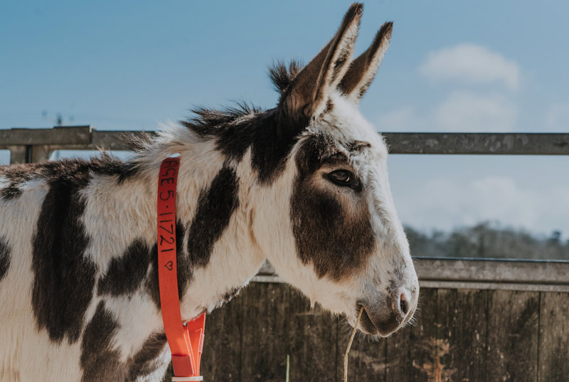 British based charity The Donkey Sanctuary has welcomed the EU vote safeguarding animal welfare.