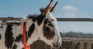 Equine charity welcomes European vote on animal welfare
