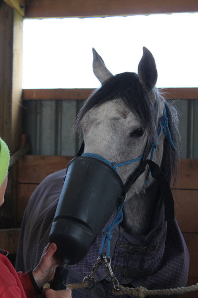 Researchers possess got identified blood biomarkers they enjoin may hold out useful inwards diagnosing equine a Blood biomarkers constitute for asthma inwards horses