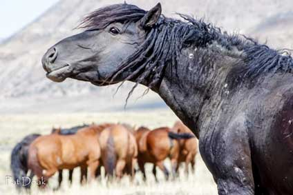 In the eyes of a mustang: An essay on spiritual conservation