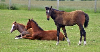 Chlamydia cases in horses highlight the need for vigilance, says researcher