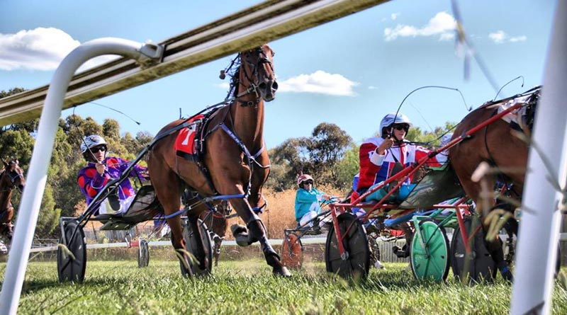 © Harness Racing NSW