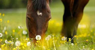 A small microchip test panel has been developed to check for horse allergies. Photo: Medical University of Vienna