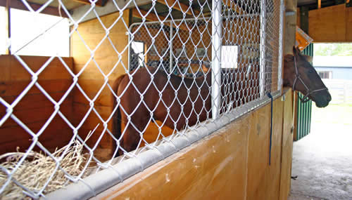 If confined for a lengthy period of time, your horse may come to view the stable as a prison. It's your job to break up the monotony!