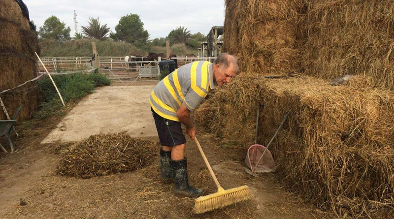 Rod Weeding at work, Without a digger, he's been moving hay by hand, digging trenches and undertaking other back-breaking work.