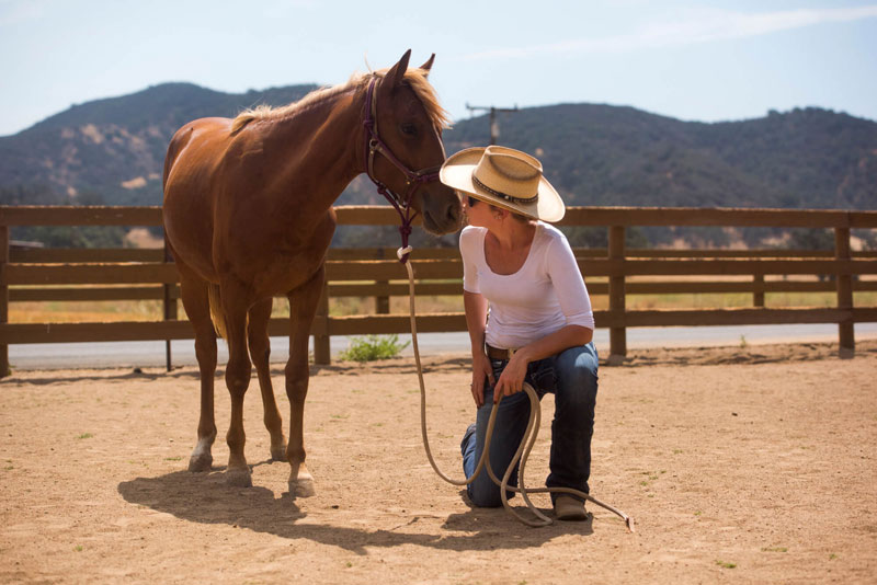 Hayley Pelton, a trainer at El Campeon Farms, plants a quick kiss on Catalina. The Santa Cruz Island horse breed is known for its affection and trusting nature.