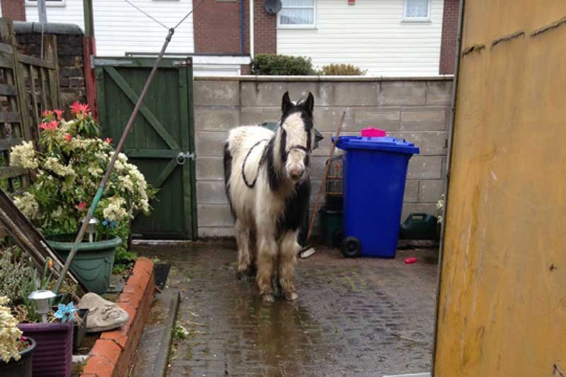 Melvin Andrews, after being left in a backyard in Stoke-on-Trent. Photo: World Horse Welfare