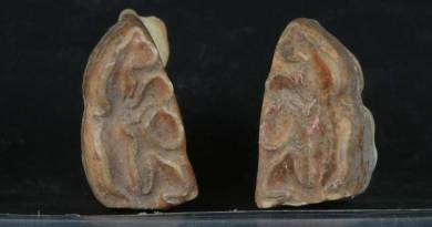 The occlusal face of both left and right LPM2 teeth that shows evidence of beveling of the enamel that is characteristic of bit wear. The teeth were from a donkey skeleton dating back 4700 years. Photo: Greenfield et al. https://doi.org/10.1371/journal.pone.0196335