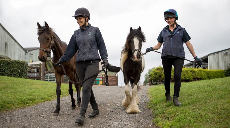 The new Code of Practice for the Welfare of Horses, Ponies, Donkeys and their Hybrids has been updated to reflect latest research and developments in equine management. It sets out requirements for all aspects of responsible ownership.