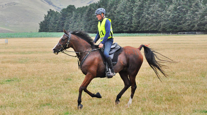 Philip Graham and Rosewood Bashir heading for the finish line after completing 160km at New Zealand's 3* championships in 2016 at Springfield. The combination won in 10:43.00.