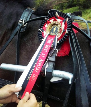 Winners of the Redwings Welfare Awards receive a rosette, certificate, medal and membership to the Official Traditional Gypsy Cob breed association.