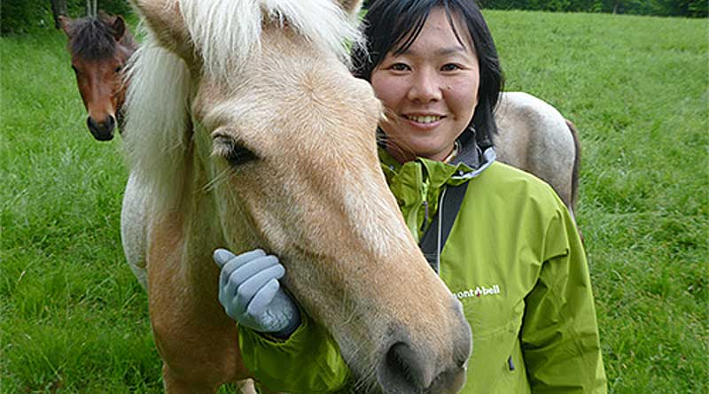 Results of the recent study in Japan showed that horses possessed high communication capabilities. Photo: Ayaka Takimoto