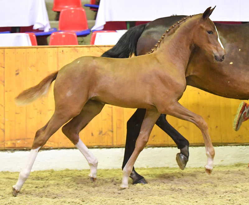 Fantasy (by Foundation) topped the64th Oldenburg Summer Mixed Sale in Germany, fetching€107,000.