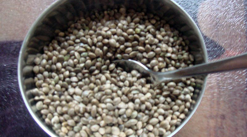 Hemp seeds, from which hemp oil is extracted.