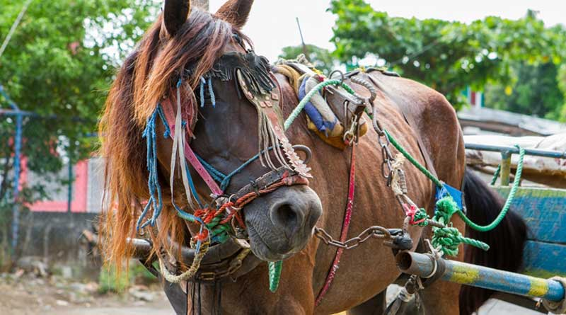 A working horse in Nicaragua.