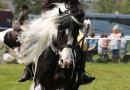 Jack's one out of the box: Abandoned cob heads for Hickstead