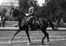 Escaping the museum of classical equitation – for the sake of the horse