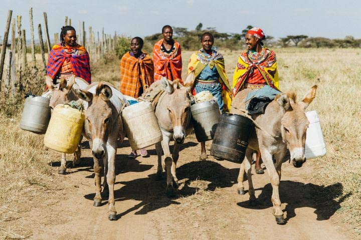 The Women4Donkeys campaign is now projected to reach six communities, equating to 82,000 women and 123,000 donkeys.