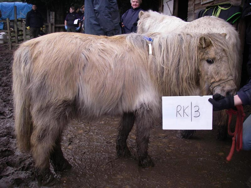 The ponies were rescued by the RSPCA earlier this year.