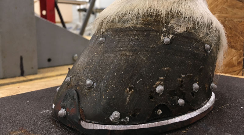 Why is hoof research lagging behind other areas of equine study?