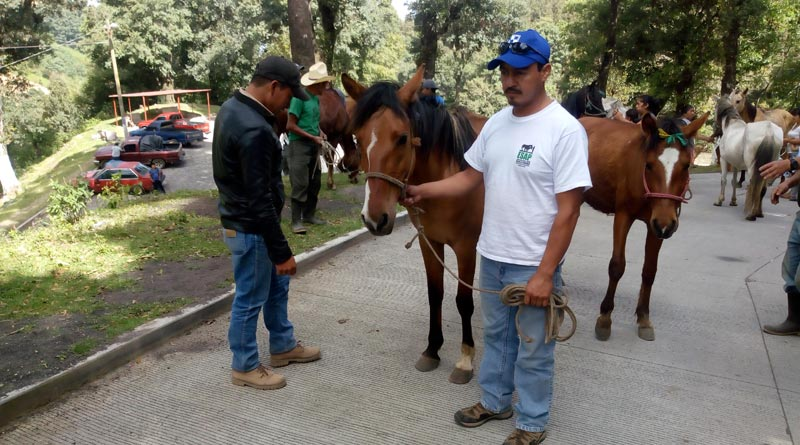 Vets and other staff carried out equine evaluations in El Rosario following the volcano eruptions.