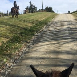 Even a quick ride can do wonders for your horse