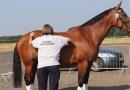 Vets praise new system for assessing horse lameness