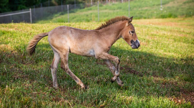 "Winnie's colt, who was born on April 30, is described as ""very herd-motivated""."