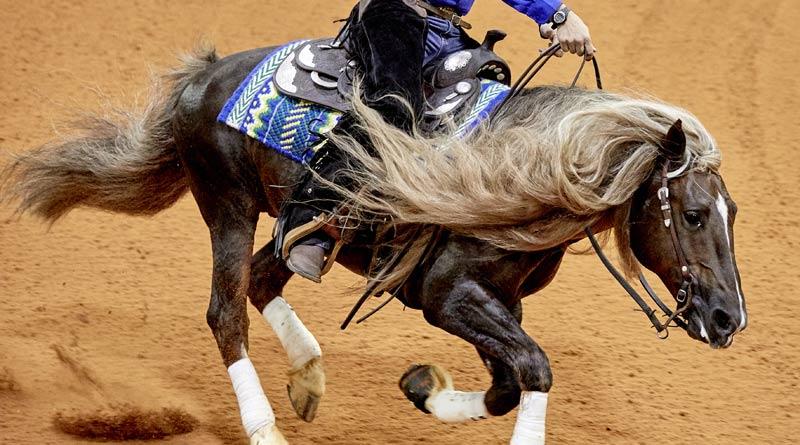 Reining horse Licurgo Tapajos, ridden by Roberto Jou Inchausti (Brazil).