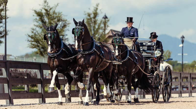Boyd Exell with his team of Carlos, Celviro, Checkmate, Zindgraaf in the dressage phase of the driving at WEG.
