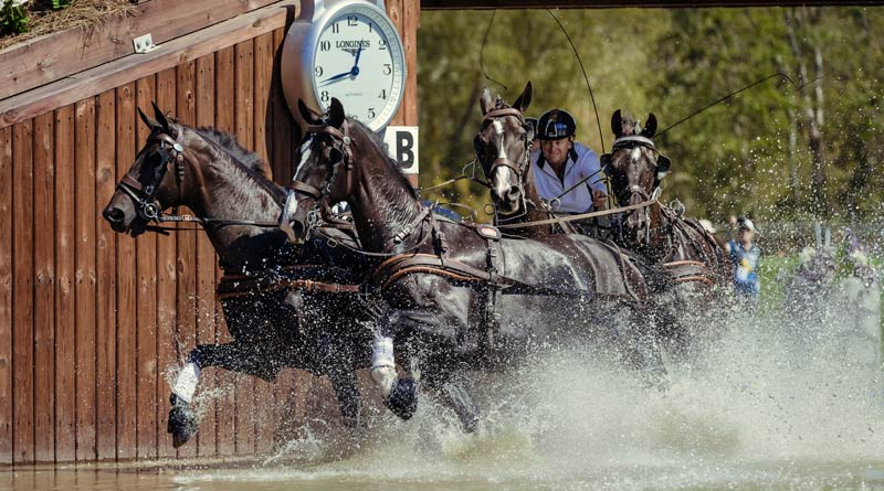 Australia's Boyd Exell with his horses Celviro, Checkmate, Daphne and Zindgraaf, won the individual driving title at the FEI World Equestrian Games.