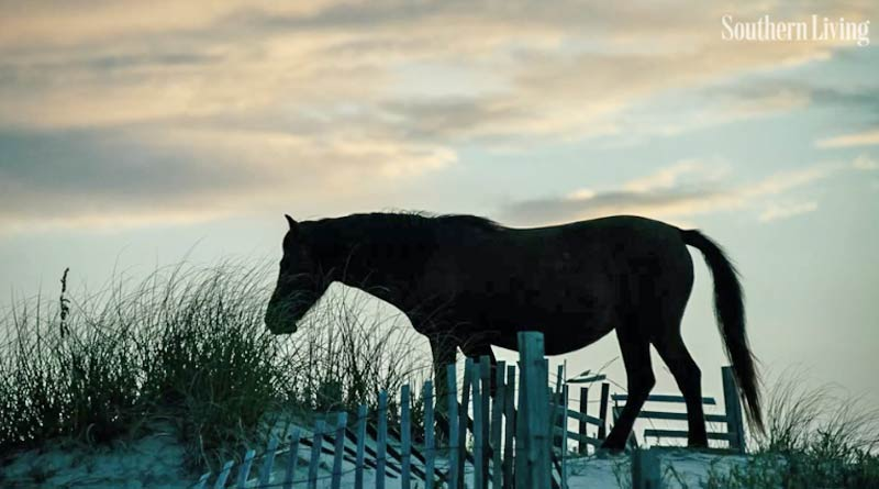 Three of the wild horse herds in the Carolinas are accounted for after Hurricane Florence.