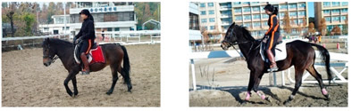 Left, a Jeju horse, and at right, a Thoroughbred.