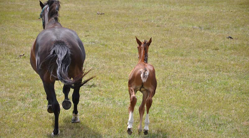 Genes relevant for early on embryo evolution inwards horses are downwardly Differences inwards cistron aspect inwards embryos seen when frozen semen is used