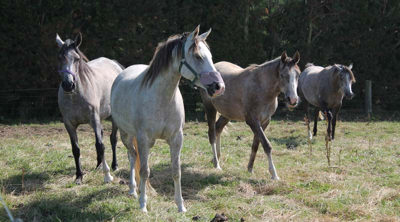 Should labor laws be used to protect horses?