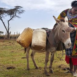 A working donkey in Kenya. © Brooke USA
