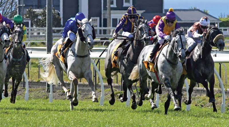 Stratocaster takes the least at New Plymouth to book his trip to Melbourne.